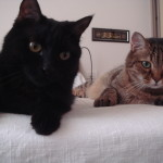 Minou and Romeo - Biancagiulia B&B, Bed and Breakfast near Rome Termini Train Station